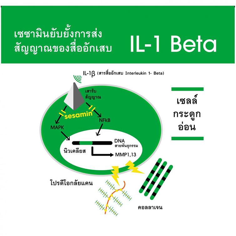 IL-1-Beta755